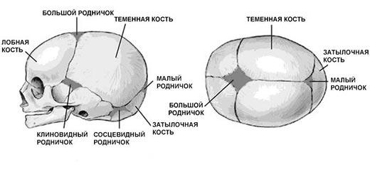 rodnichok1
