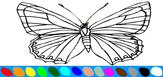 бабочка5
