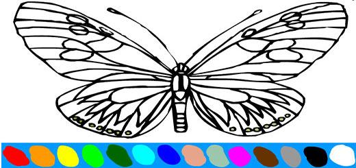 раскраска-бабочка6