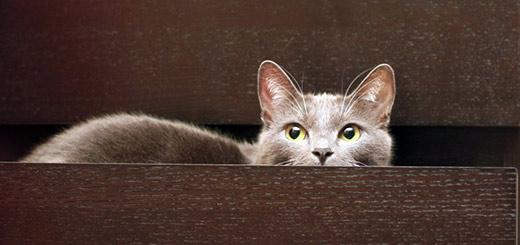 кот-в-шкафу