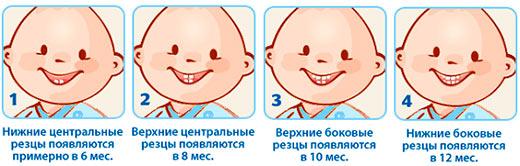 прорезывание-зубов-таблица
